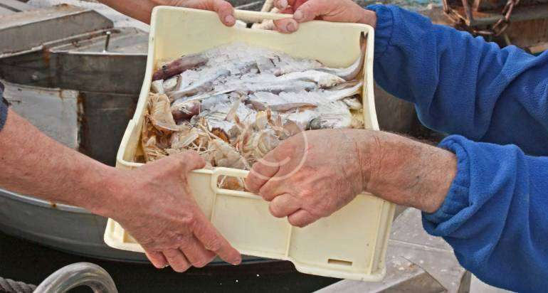 Strong sales of lionfish are phenomenal
